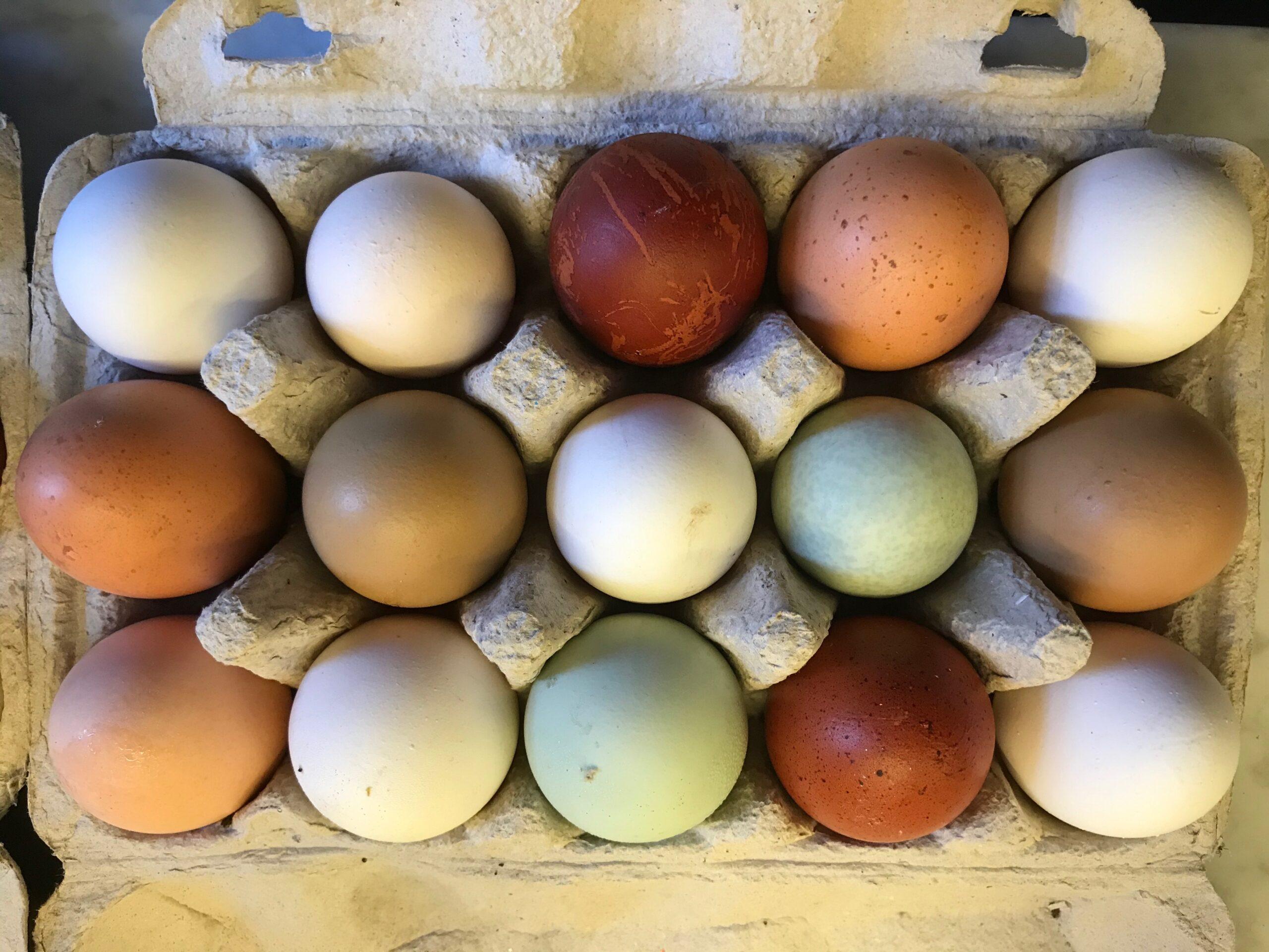 Æg kan se sådan ud